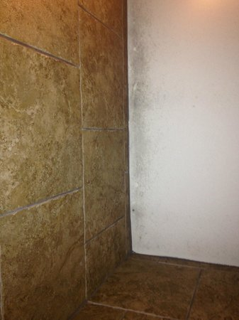 Lake Ozark, MO: Camden at the Lake - Mold growing in Shower