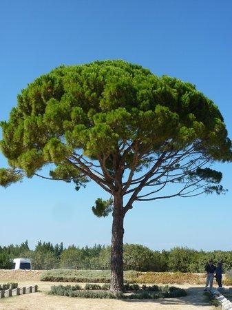 Hassle Free Travel: lone tree cemetery