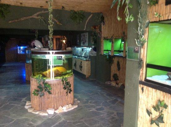 Corfu Reptilla Roda