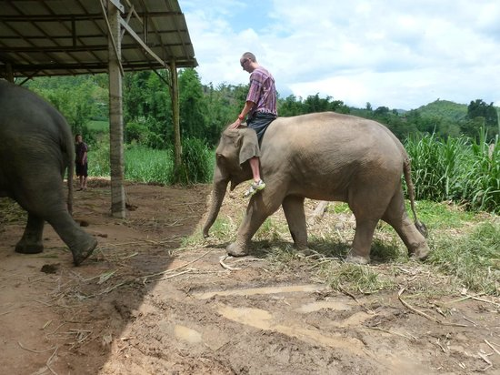 Chiang Mai International Youth Hostel(HI - Chiang Mai): Elephant tour