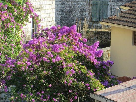 Apartmani Kovacevic: Nice gardens