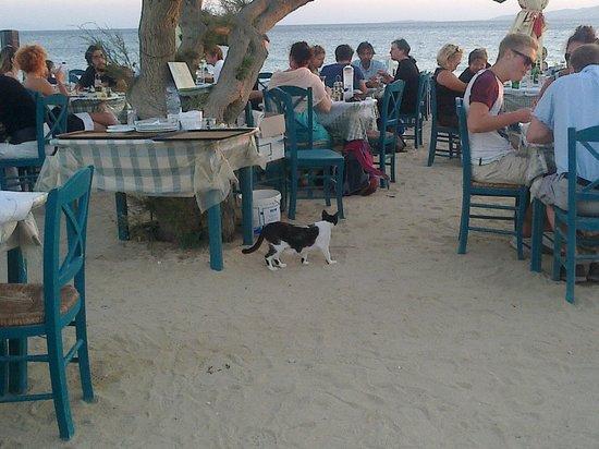 Taverna Paradiso : Details with cat