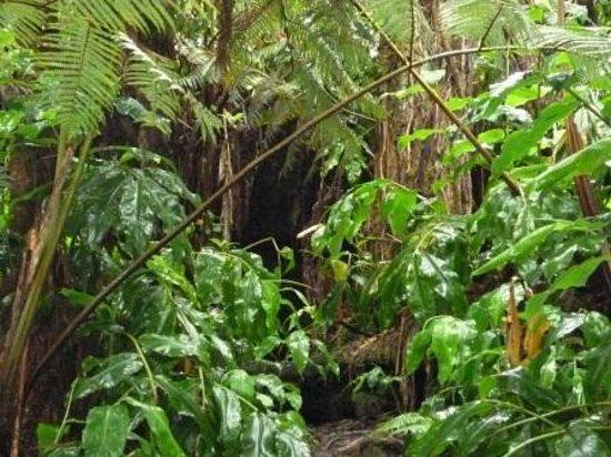 Aloha Crater Lodge: 溶岩流トンネルへの入り口