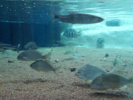 Aquarium Foto Di Texas State Aquarium Corpus Christi