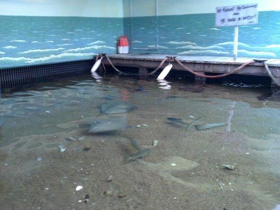 Texas State Aquarium: aquarium