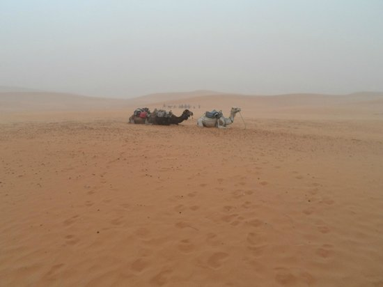 Tours Of Peace & Morocco Holidays - Day Tours: camels in the sandstorm
