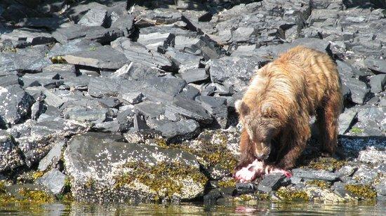 Big Timber Lodge : Bear seen from lodge's fishing boat