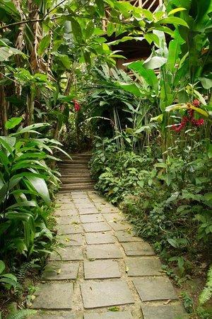 Pousada Naturalia: The path leading to reception