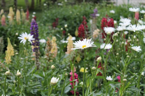 Grand Lodge Crested Butte: Wildflowers outside the Lodge