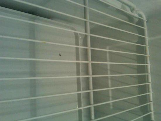 Royal Palm Bay: Dead bug in fridge