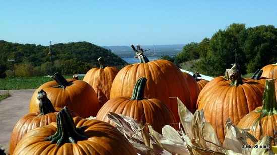 Danzinger Vineyards: A picture from October '12. Pumpkins and Fall colors add to the experience.