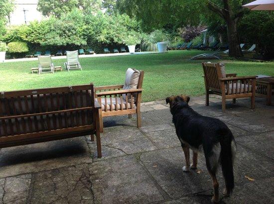 Chateau d'Arpaillargues: Cadix, la cagnolina dolcissima dell'hotel contempla la piscina