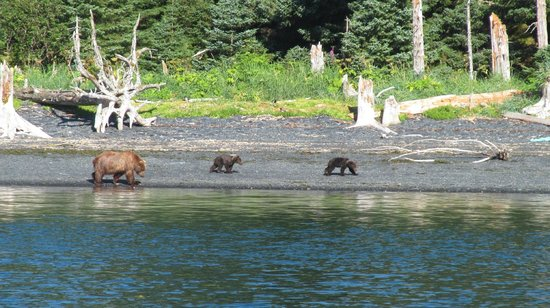 Big Timber Lodge : Bears from the fishing boat