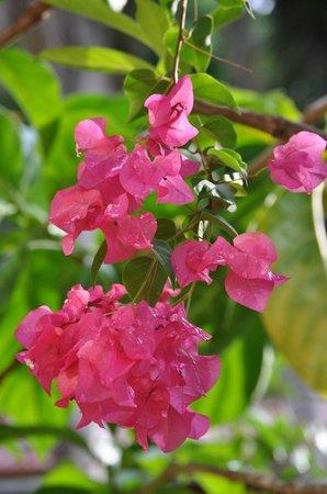 Condotel Las Cascadas: Our Garden to feel comfortable and relaxed