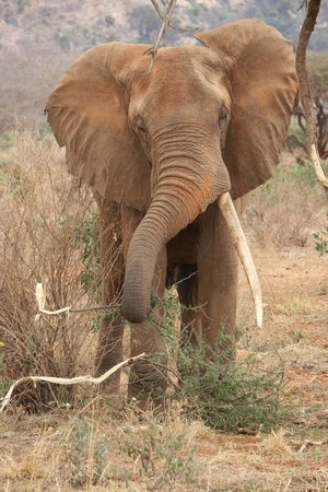 Tunda Day Tours: Elephant