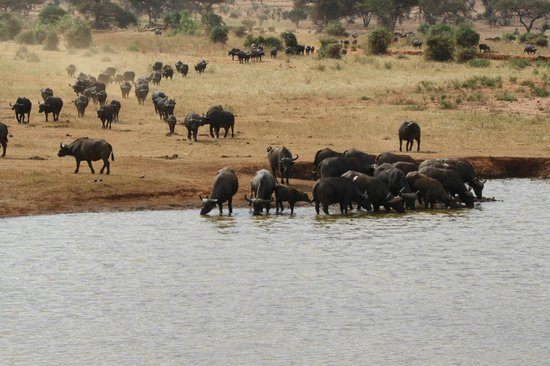 Tunda Day Tours: A crowded water hole at the lodge!!!