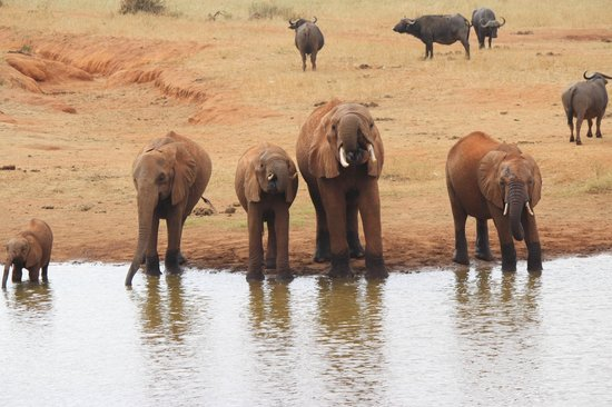 Tunda Day Tours: Elephant Drinking