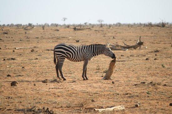 Tunda Day Tours : Zebra