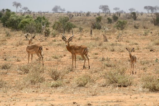 Tunda Day Tours : Impala