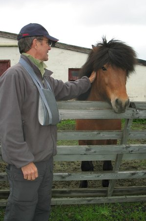 Gunnarsholmi Guesthouse: friendly encounter with an Iclandic horse
