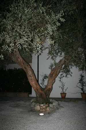 Tenuta Belvedere : Träden har nattbelysning