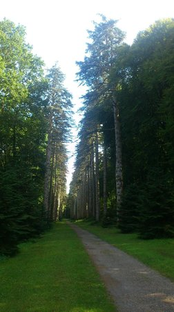 Woodstock House and Gardens: Fir Tree Walk