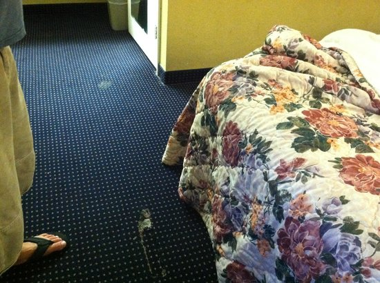 Magnuson Inn and Suites Gulf Shores: The nasty floor