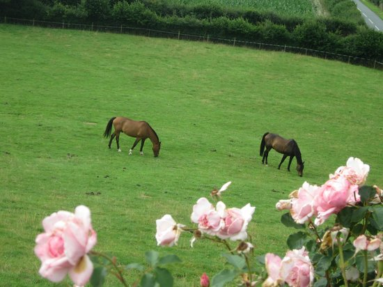 Highgate Cottages: The horses in the adjoining field