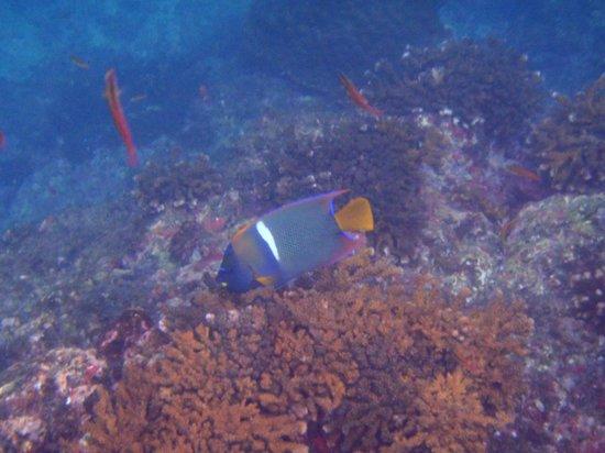 Cabinas Pura Vida: under sea