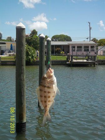 The Bayside Inn & Marina: One more fish!