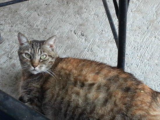 Siesta Suites: Siesta's resident cat