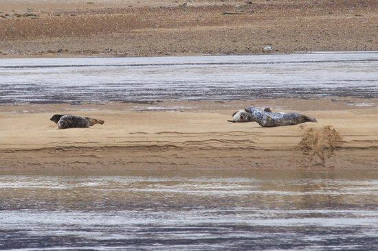 Dornoch Beach: Seals on Loch Fleet sandbars