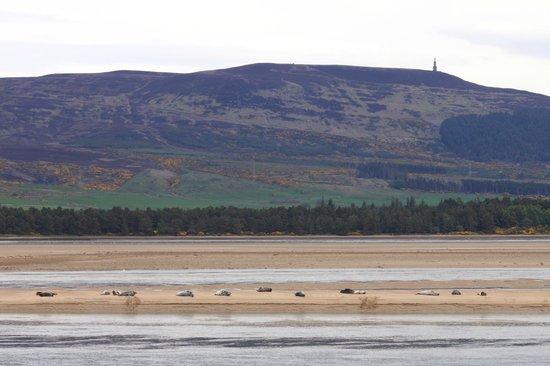 Dornoch Beach: Duke of Sutherland's monument on skyline