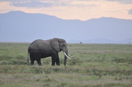 Ol Tukai Lodge: Amboseli NP