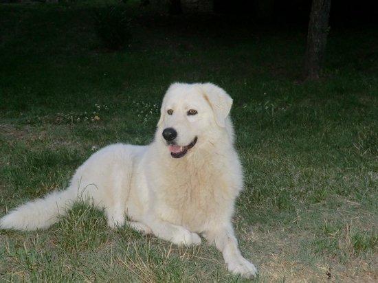 Our good companion Livia.