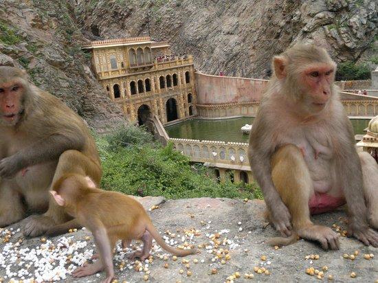 Galtaji Temple : grandi e piccoli