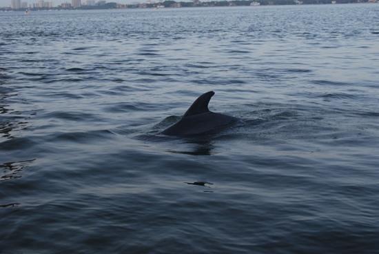 Siesta Key Watersports: feeding dolphins