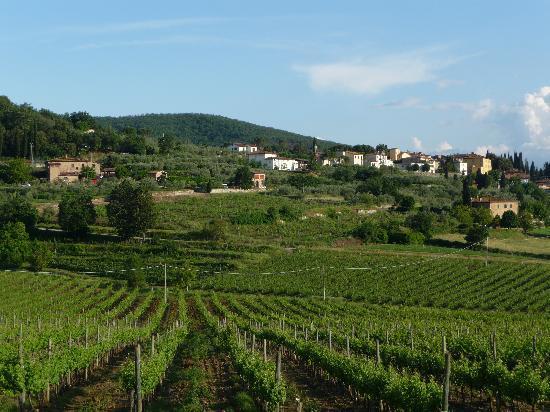 L'Agriturismo Tenuta La Pieve: dans les vignes