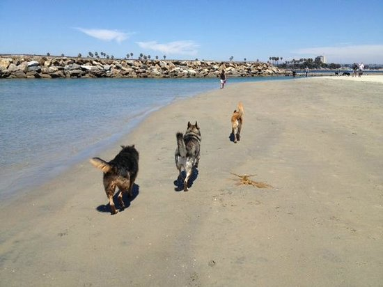 Ocean Villa Inn: Leash Free Dog Beach