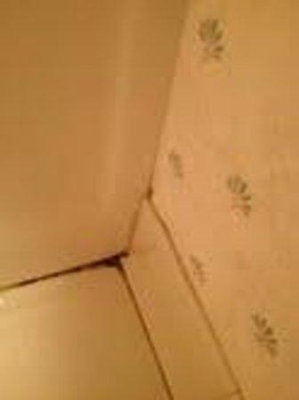 Gateway Inn & Suites : Mold and dirt on bathroom floor.