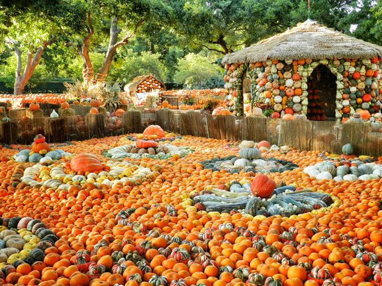 Arboreto y Jardín Botánico de Dallas: Pumpkin Village - Autumn at the Arboretum