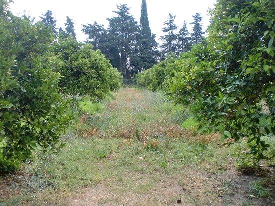 Bed & Breakfast Luna & Limoni: Orangenbäume vor dem Haus