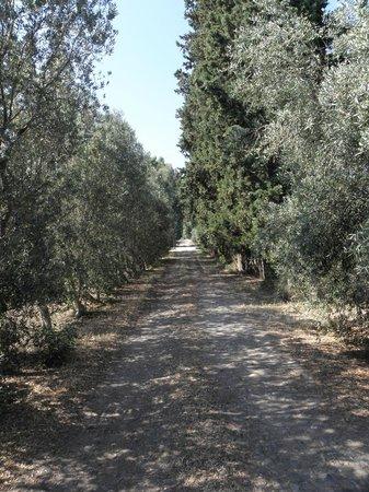 Bed & Breakfast Luna & Limoni: Olivenbäume um das Haus