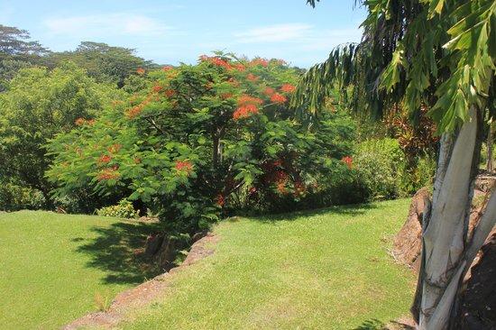 Kauai Island Experience