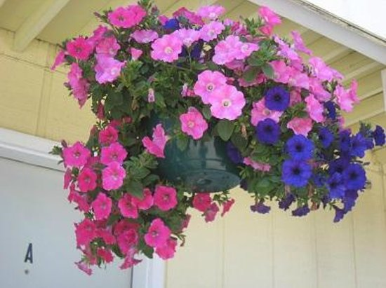 Pioneer Inn Homer : Lots of very pretty hanging baskets of flowers were a nice touch.