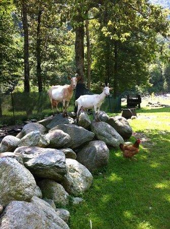 Agriturismo In Valle sul Fiume: animali in valle sul fiume