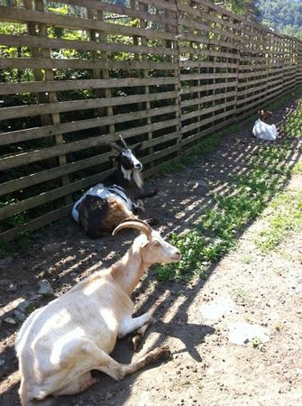 Farm In Valle sul Fiume: animali agriturismo