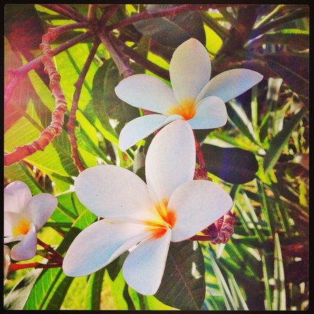 Las Plumerias Lodge and Surf: Beautiful flowers in the garden