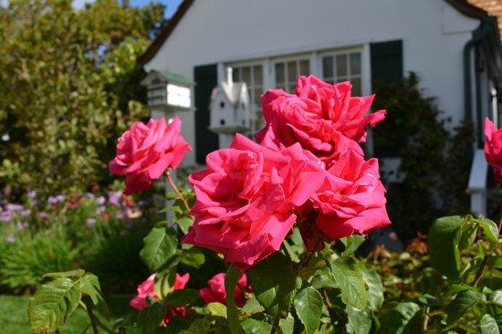 Lincoln Green Inn: Roses in bloom