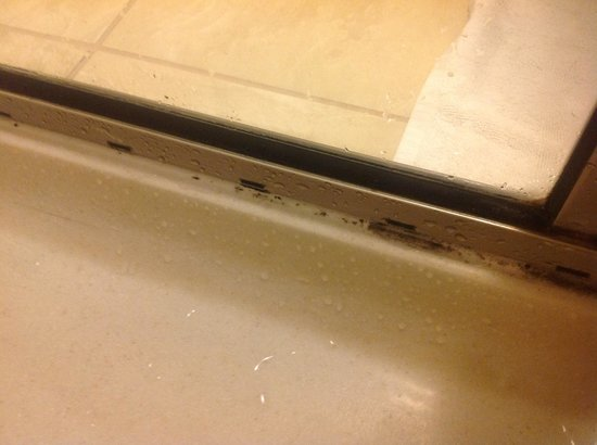 Embassy Suites by Hilton Buffalo: Shower Stall w/Black Mold